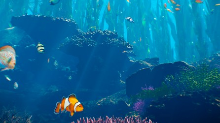 Sea Life Scheveningen header